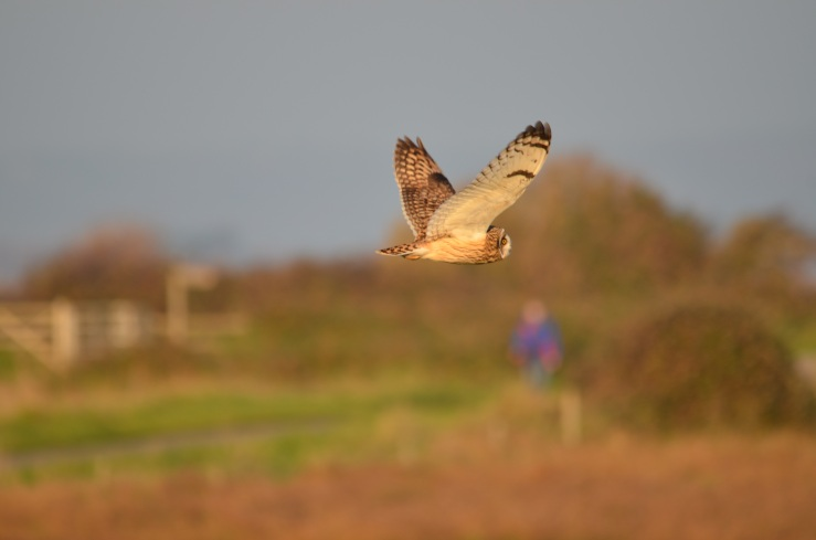 SEO 4 I'm off WWT Steart 17 Nov 18