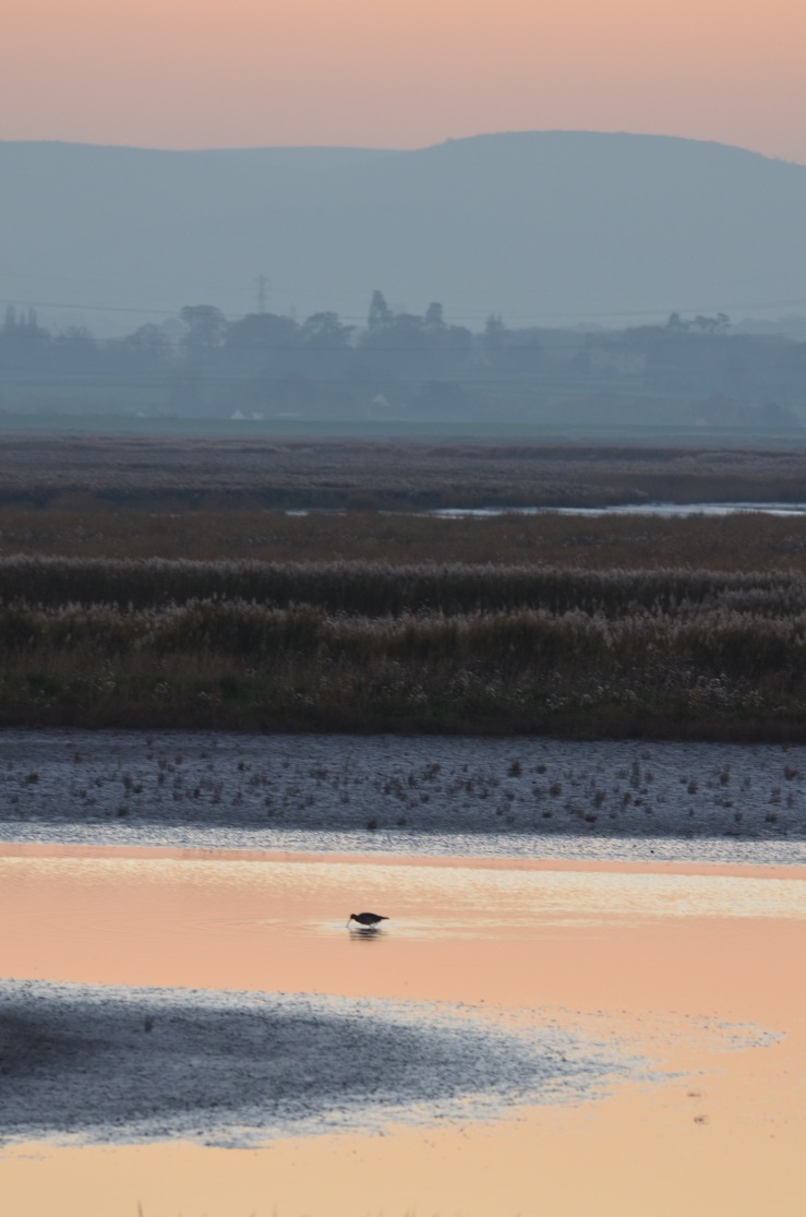 curlew sunset 2 WWT Steart 17 Nov 18